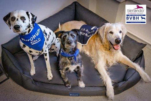 Sicherheitsbedürfnis des Hundes und Raumoptimierung - Die besondere Form des Hundebettes für Bürohunde