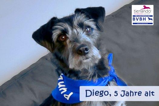 Diego (Mischling) 5 Jahre alt, aus dem spanischen Tierschutz Partner von Anette Petzoldt, Geschäftsführerin der House of Dogs Messe