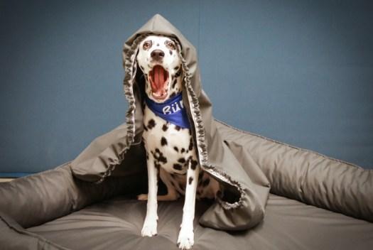 Nachhaltigkeit und Detailverliebtheit – Die Verarbeitung des Bürohund-Hundebettes: