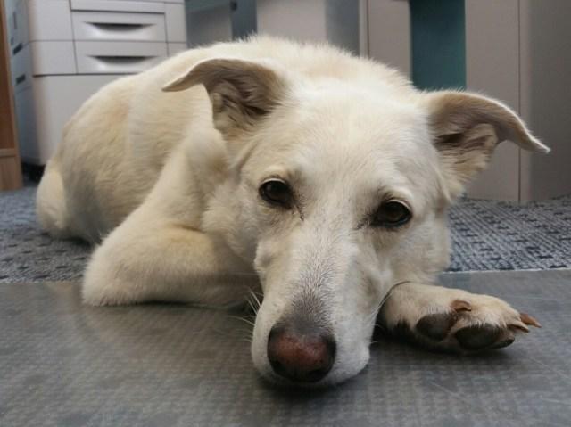Bürohund bei Tasso: Abby