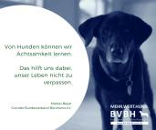 Achtsamkeit durch Hunde