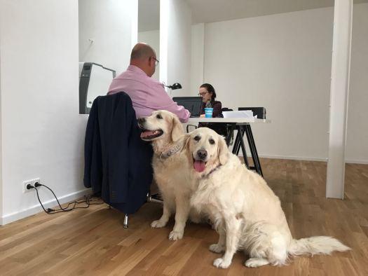 Bürohundtag: Olaf in der Beek MdB