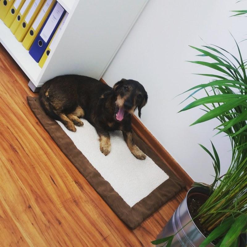 Bürohundtag: Andrea Lindholz MdB