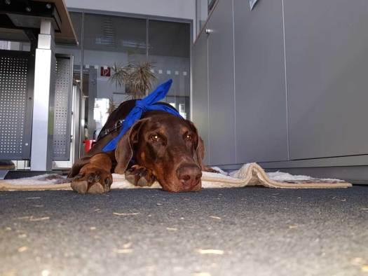 Despina Bürohund Axel Springer