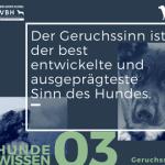 Hundewissen Bürohund: Der Geruchssinn ist der best entwickelte und ausgeprägteste Sinn des Hundes
