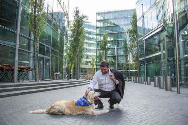 Bürohund-MehrWertHund für Unternehmen