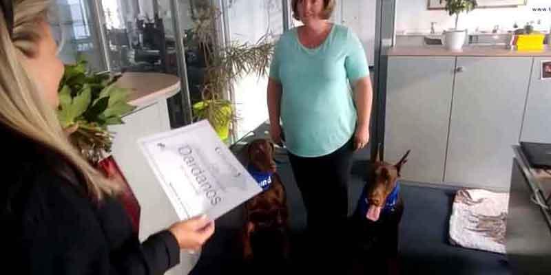 Hundert Bürohunde bei Axel Springer