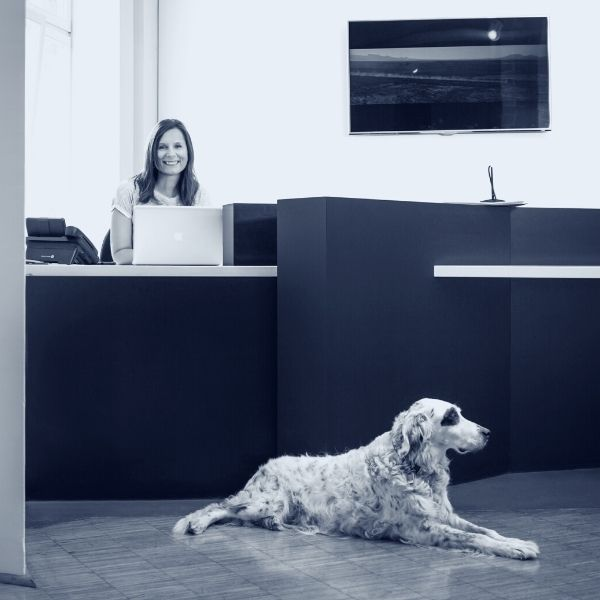Integration Bürohund Unternehmen - Bürohunde verbessern die Arbeitgebermarke