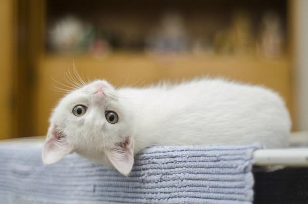 ゆる~いネコの無料(フリー)図案【アイロンビーズ・クロスステッチ・編込み柄に】