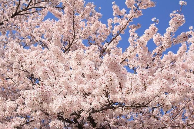 春爛漫 意味 由来
