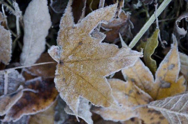 初霜の候 意味