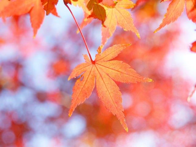 深秋の候 意味