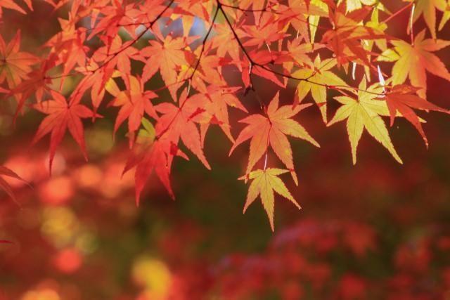 晩秋の候 意味