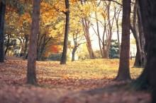 落葉の候 意味