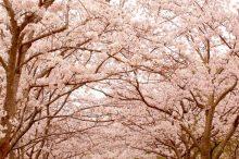 花曇り 意味 時期