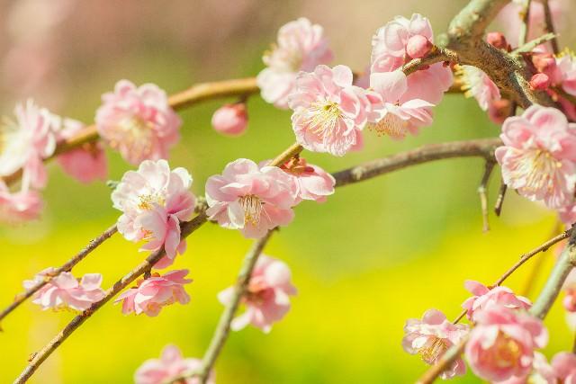 浅春の候 意味