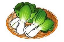 チンゲン菜 保存