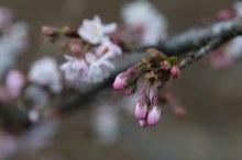 春色の候 意味