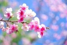 春和の候 意味