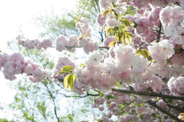 春陽の候 意味