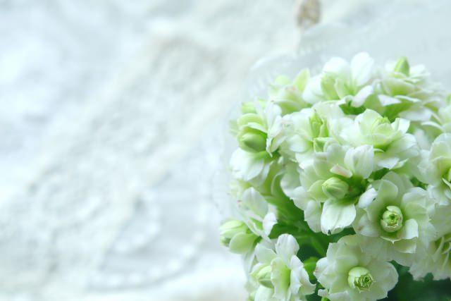 カランコエ 花言葉