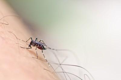蚊に刺されやすい 血液型