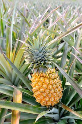 パイナップル 花言葉