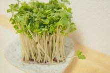 ブロッコリースプラウト 栄養