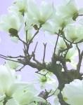 花まつりの風に。