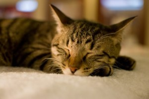 眠い・猫3