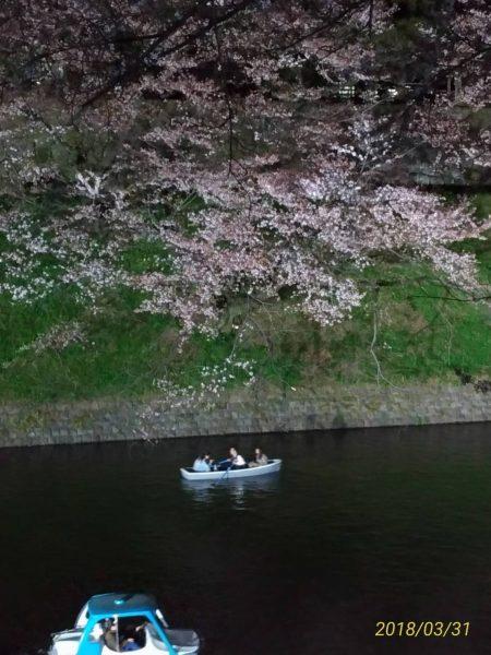 東京・千鳥ヶ淵緑道の夜桜