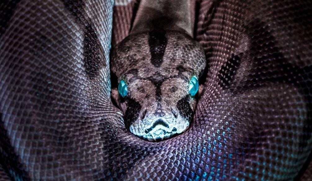 le serpent de la genese berechit