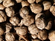 image of walnuts from our garden at Cortijo Las Viñas