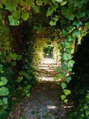 image of the grapevine covered pergola in our garden