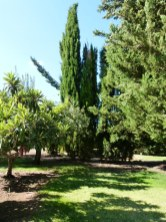image of tall pine trees in our garden at Cortijo Las Viñas
