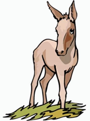 asno humillado por un caballo