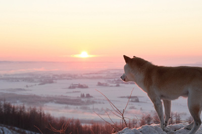 photoACの柴犬写真3
