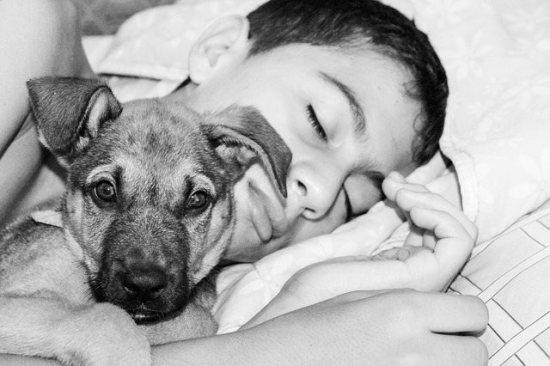 犬に癒される