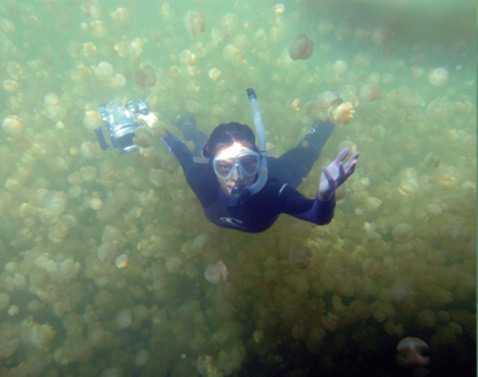 медузы2