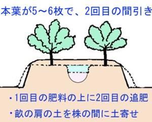 mabiki-tuihi (4)