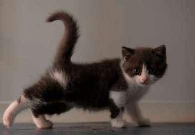 China clona su primer gato
