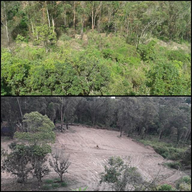 Siembra de café lleva a deforestación en Colinas de Carrizal