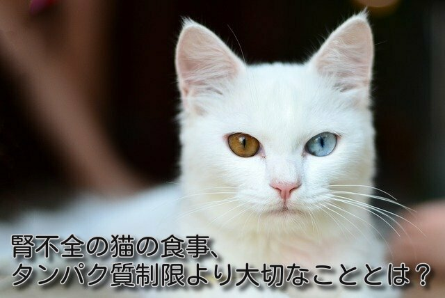 腎不全の猫は食事量が大切