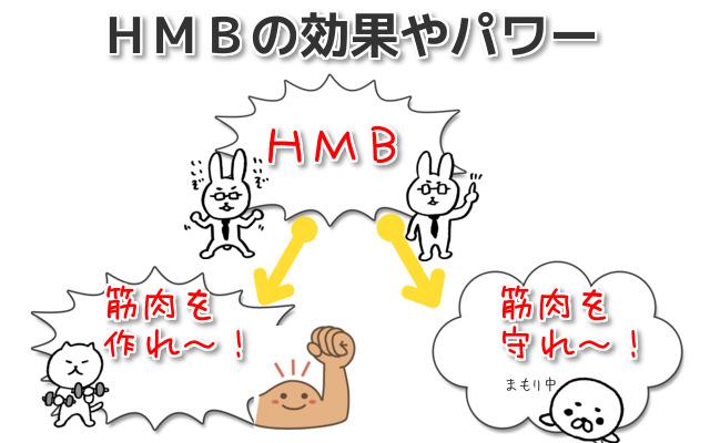 HMB 効果