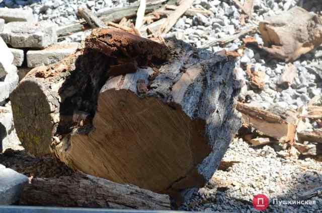 На Софиевской уже спилили 39 дерева: еще на десяти появились странные отметки. Фото