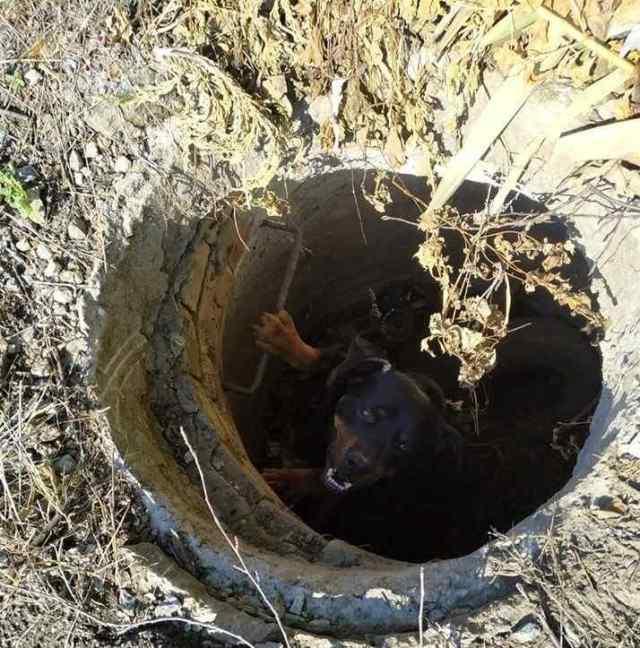 В Измаиле спасли собаку, провалившуюся в колодец
