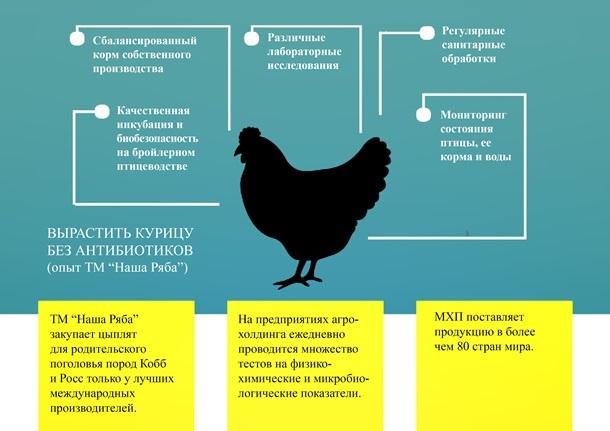 Магазинная курятина без антибиотиков – реально ли это вообще?Спецпроект
