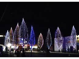 【12月1日(土)〜1月31日(木)】豊里駅前冬の蛍通り|豊里駅前通りの約100本(約400m)の銀杏並木と産直がんばる館(陸前豊里駅)を約4万個の電球で彩ります。