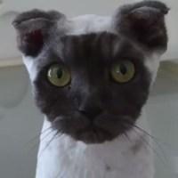 顔だけが丸く黒い猫さん、その正体は……ヘアカットしたてでした💦