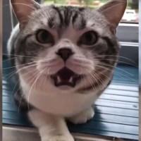 犬の遠吠えに反応した猫の遠吠えが可愛い声で癒されます❤️